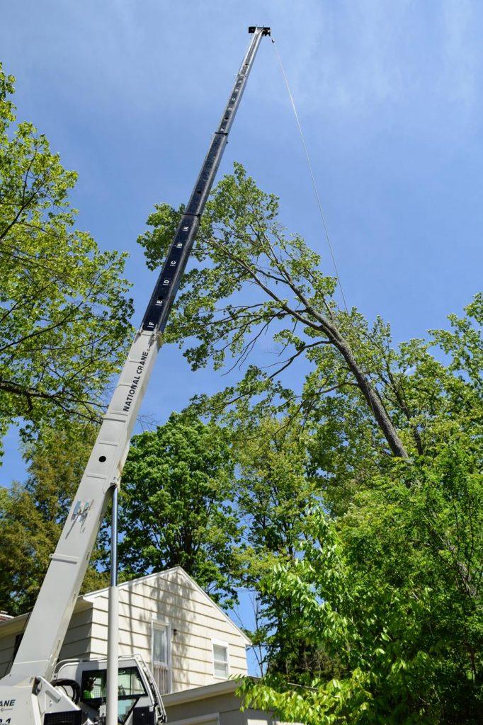 Crane Removal Service