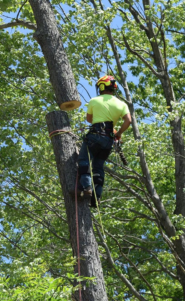 Advantage Tree Removal Team